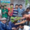 To build a green developed Bangladesh,  52,040 Saplings Plant with initiative of DAM Education Projects
